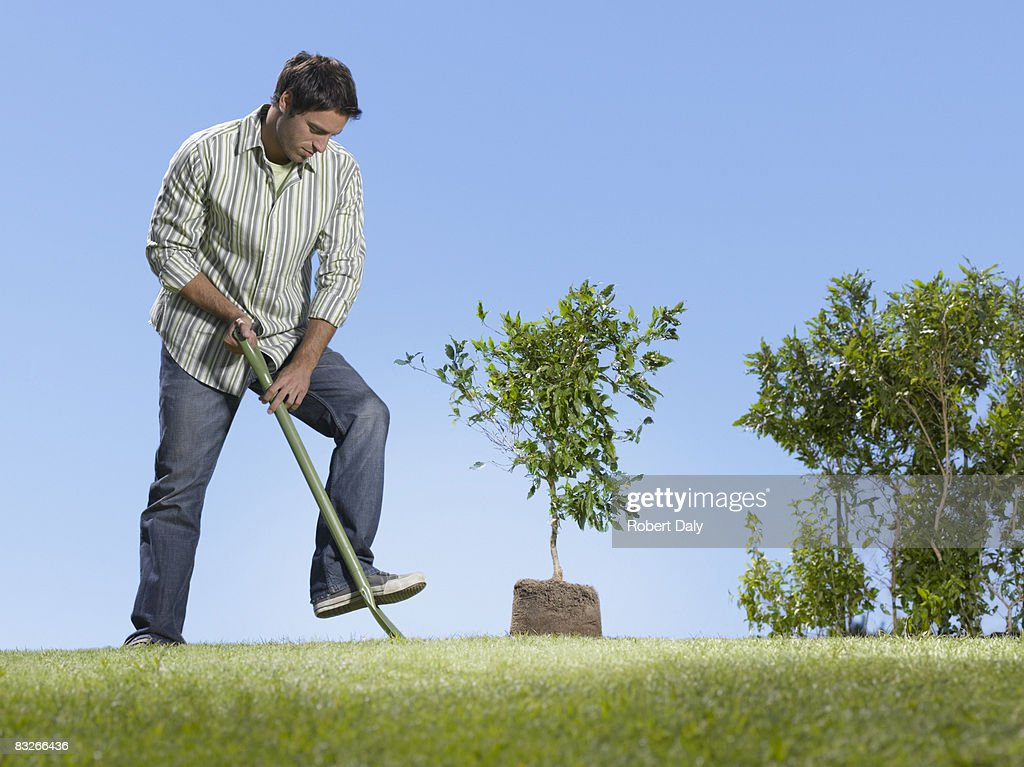 Man planting small tree : Stock Photo