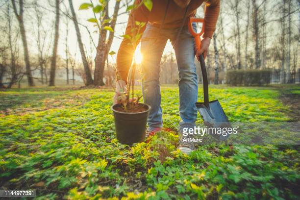 man planting tree on arbor day in springtime - plant stock pictures, royalty-free photos & images