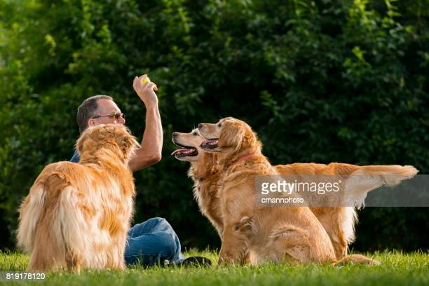 man playing fetch with his dogs at sunset - cmannphoto stock pictures, royalty-free photos & images