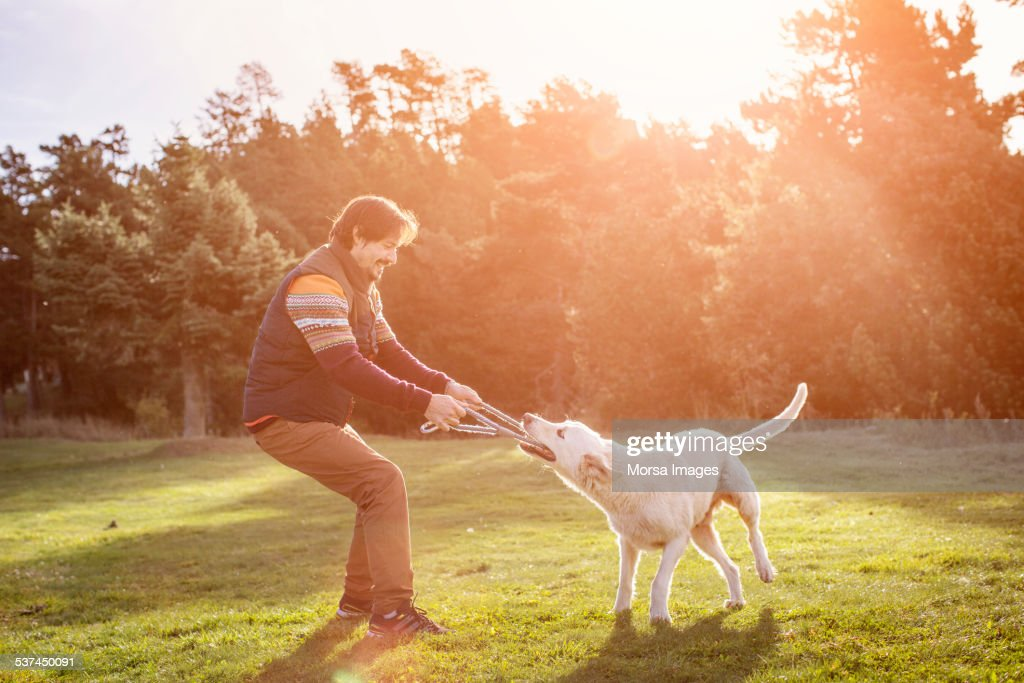 Man playing tug of war with dog in park : Stock Photo