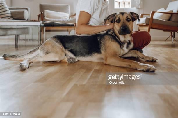 hombre jugando con el perro - animal doméstico fotografías e imágenes de stock