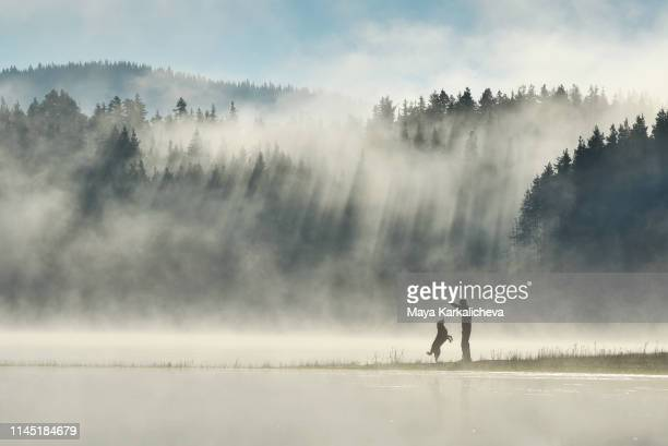 man playing with his dog by a misty mountain lake with sunbeams in a pine woodland - mountain range stock pictures, royalty-free photos & images