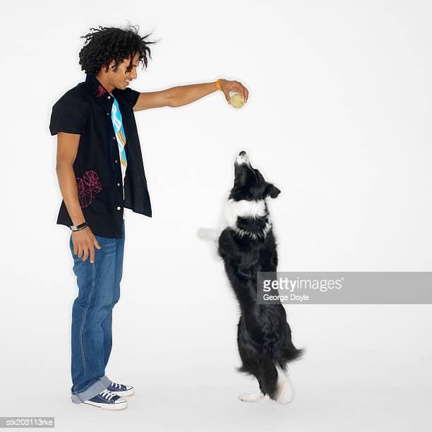 man playing with his shepherd dog
