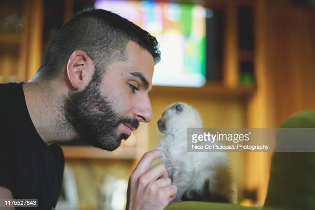 man playing with kitten - nico de pasquale photography stock pictures, royalty-free photos & images