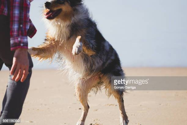 Man playing with leaping dog on beach, cropped