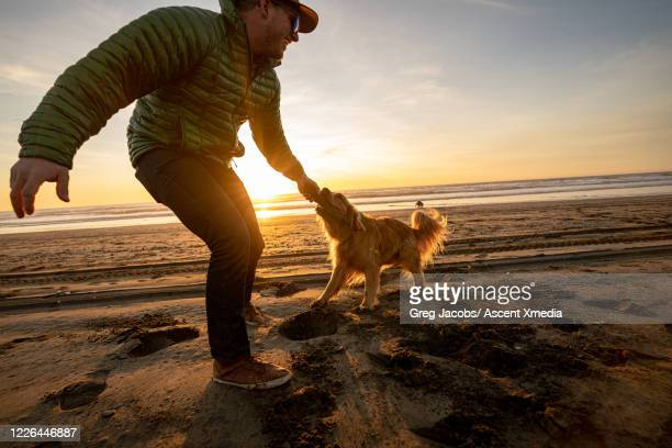 man plays tug o war with dog and stick at sunrise on beach - dogs tug of war stock pictures, royalty-free photos & images
