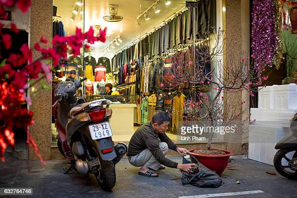 A man prepares his cherry blossom tree on the streetside of the Old Quarter on January 26 2017 in Hanoi Vietnam The Chinese Lunar New Year also known...