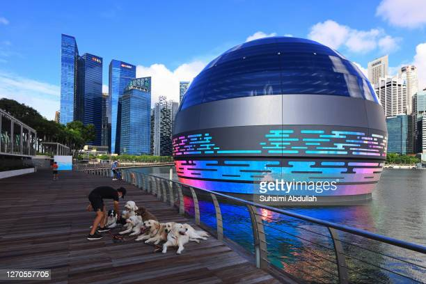 Man prepares his dog for a photoshoot in front of the new Apple flagship store at Marina Bay Sands waterfront on September 4, 2020 in Singapore. The...