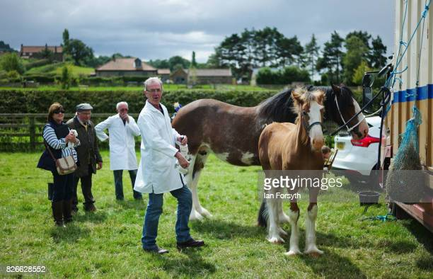 Man prepares his heavy horse ahead of his event during the Osmotherley Country Show on August 5, 2017 in Osmotherley, England. The annual show hosts...