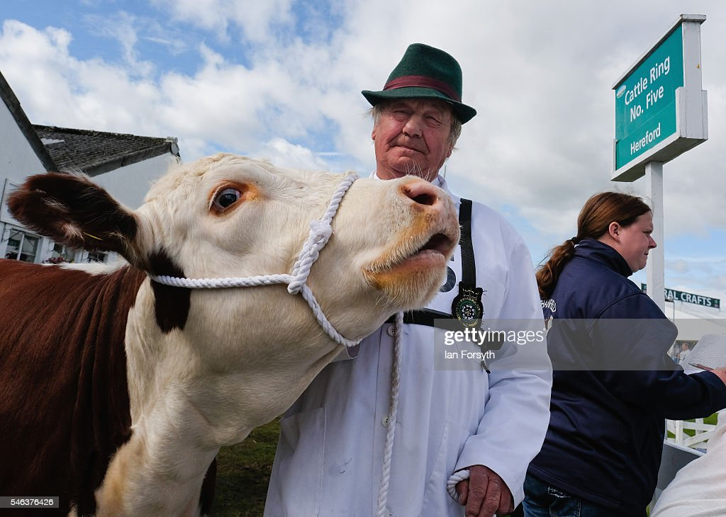 A man prepares to lead his Hereford cow into the arena at the Great Yorkshire Show on July 12, 2016 in Harrogate, England. The annual Great Yorkshire Show now in its 158th year is the UK's premier agricultural event and brings together agricultural displays, livestock events, farming demonstrations, food, dairy and produce stands as well as equestrian events to the thousands of visitors who attend the popular show over three days to celebrate the farming and agricultural community and their way of life.