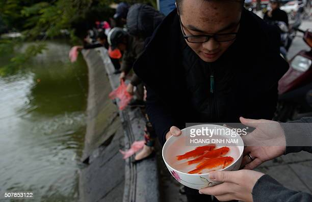 A man prepares to release three golden carp from a bowl at Hoan Kiem Lake in the centre of Hanoi on February 1 2016 as Vietnamese celebrate 'Kitchen...
