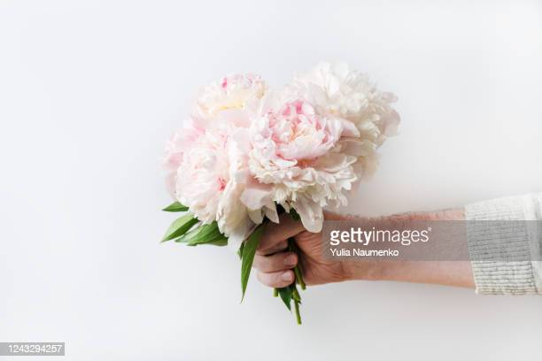 a man presents a bouquet of beautiful chic pink peonies on international womens day or valentine's day. peonies in a man's hand. congratulates concept, place for text. - valentine' day stock pictures, royalty-free photos & images