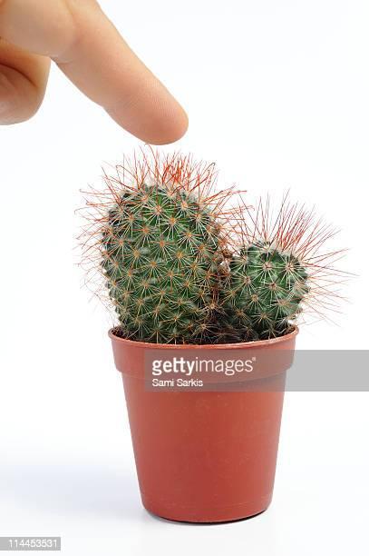Man pressing his finger on a mini cactus