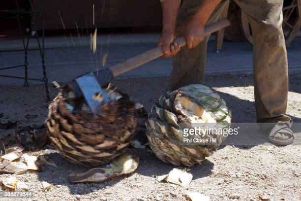 Man processing agave catcus with an axe When the agave is harvested it is cut into 'pineapples' before being crushed for fermentation Oaxaca in...