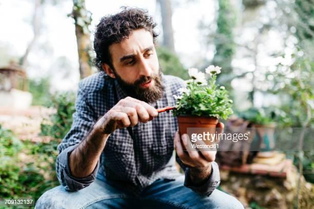 man pruning flower in his garden - el mundo de la naturaleza fotografías e imágenes de stock