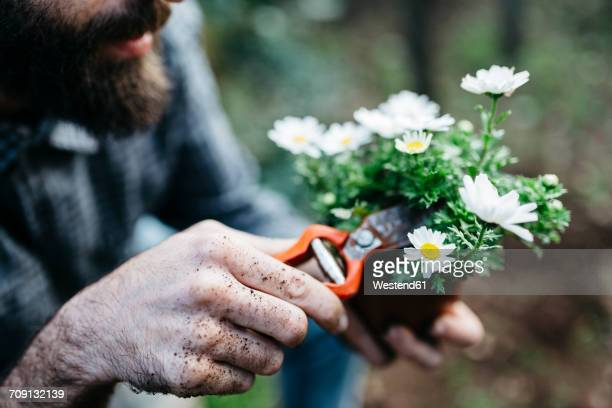 man pruning flower in his garden - pruning shears stock photos and pictures