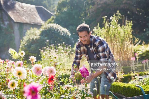 Man pruning flowers in sunny garden