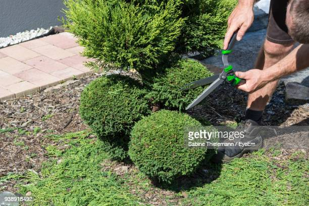 man pruning plants at lawn - pruning shears stock photos and pictures