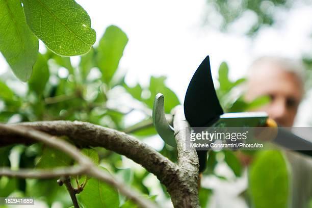 Man pruning shrub