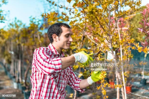 man pruning the branch