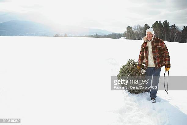 man pulling a spruce tree - dragging stock pictures, royalty-free photos & images