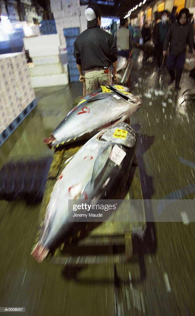 Man Pulling a Trolley With Frozen Tuna on it, Tokyo, Japan : Stock Photo