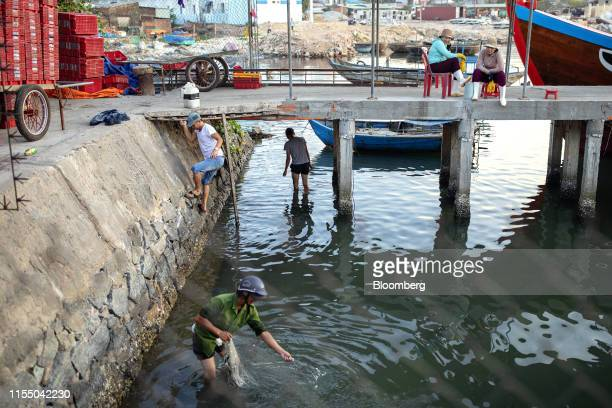 A man pulls a fishing net in Tan Quang harbor in Quang Nam province Vietnam on Wednesday June 26 2019 Fishermen are on the front lines of Asias most...