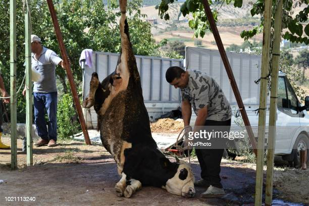 A man pulls a sacrificial animal with a rope to butcher on the first day of Eid alAdha in southern Kahramanmaras province of Turkey on August 21 2018