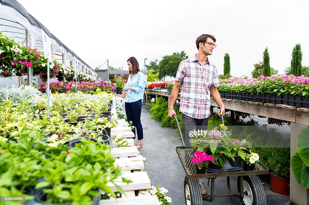 Man pushes cart full of flowers in nursery : Stock Photo