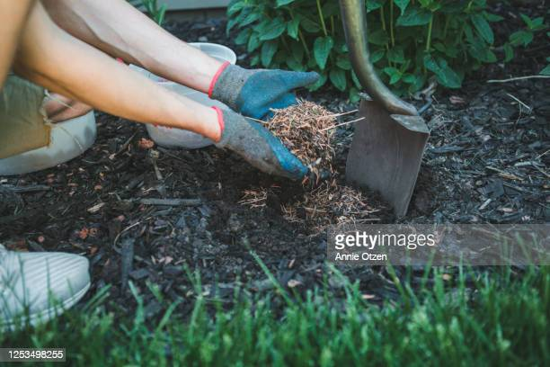 man putting mulch into a garden - mulch stock pictures, royalty-free photos & images