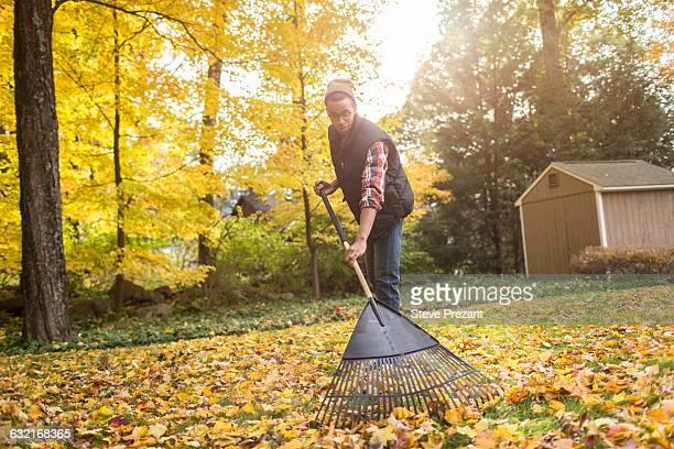man raking in autumn leaves garden - rake stock pictures, royalty-free photos & images
