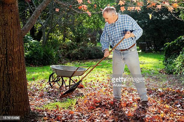 man raking leaves in garden - rake stock pictures, royalty-free photos & images