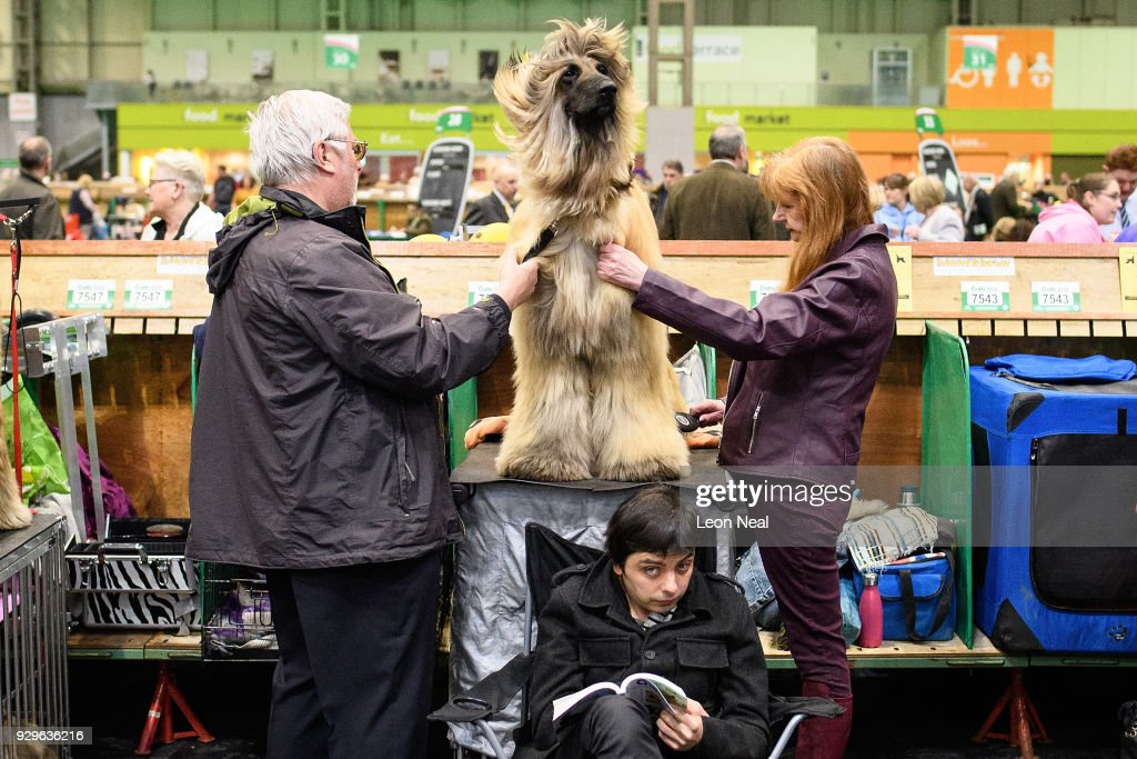 A man reads his book as 'Elmer' the Afghan Hound (C) is groomed ahead of competition on day two of the Cruft's dog show at the NEC Arena on March 9, 2018 in Birmingham, England. The annual four-day event sees around 22,000 pedigree dogs visit the centre, before the 'Best in Show' is awarded on the final day.