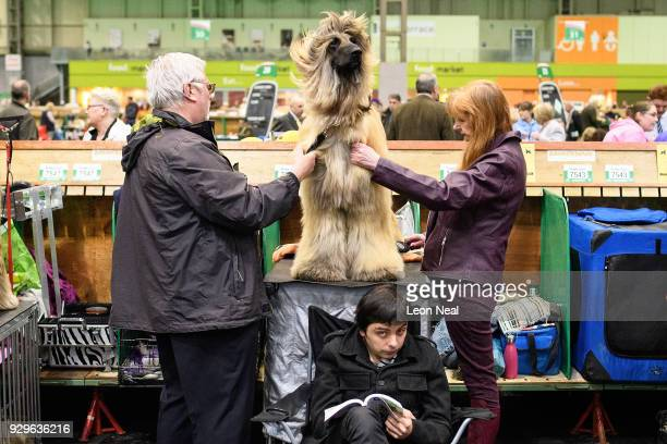 A man reads his book as Elmer the Afghan Hound is groomed ahead of competition on day two of the Cruft's dog show at the NEC Arena on March 9 2018 in...