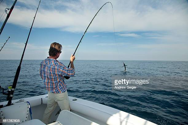 man reeling in sailfish on fly rod on ocean. - sailfish stock pictures, royalty-free photos & images