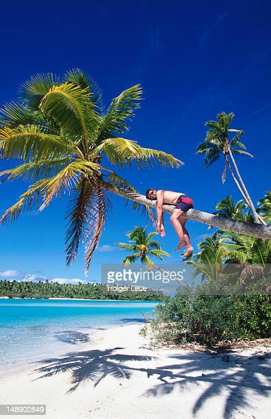 Man relaxing on coconut tree.