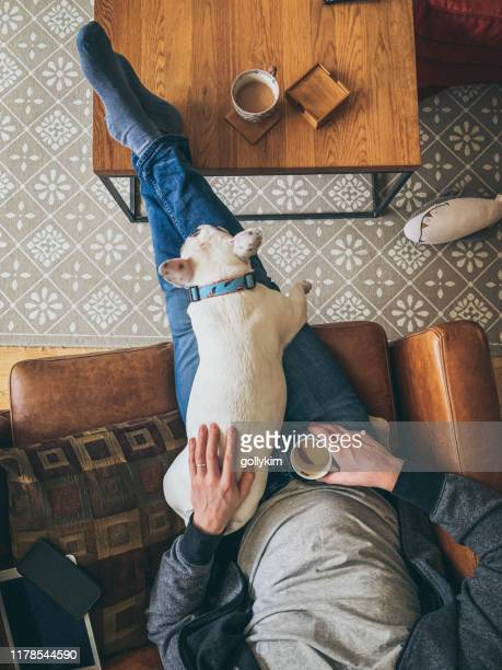 man relaxing with his french bulldog on a sofa, overhead view - pets stock pictures, royalty-free photos & images