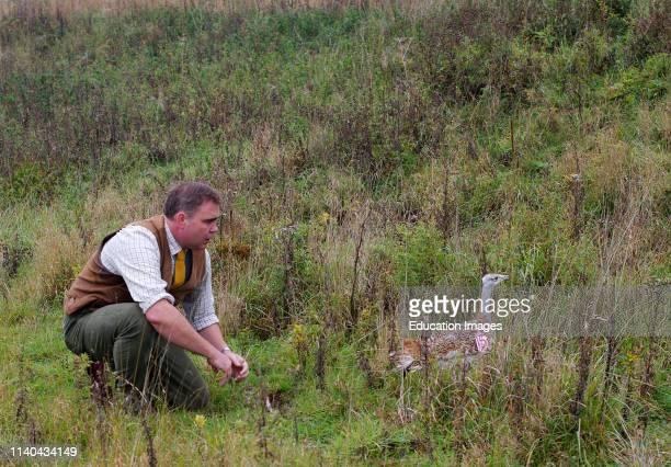 Man releasing a Great Bustard on to Salisbury Plain