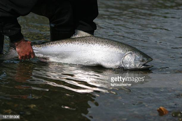 A man releasing an Alaska King Salmon into the sea