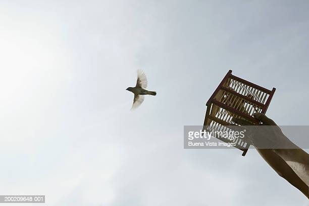 man releasing bird from small cage, low angle view - releasing stock pictures, royalty-free photos & images