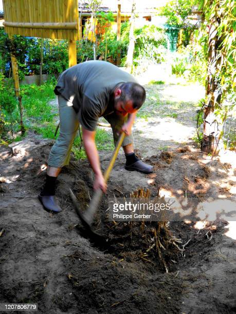 man removing tree stump with a pick axe - sarthe stock pictures, royalty-free photos & images