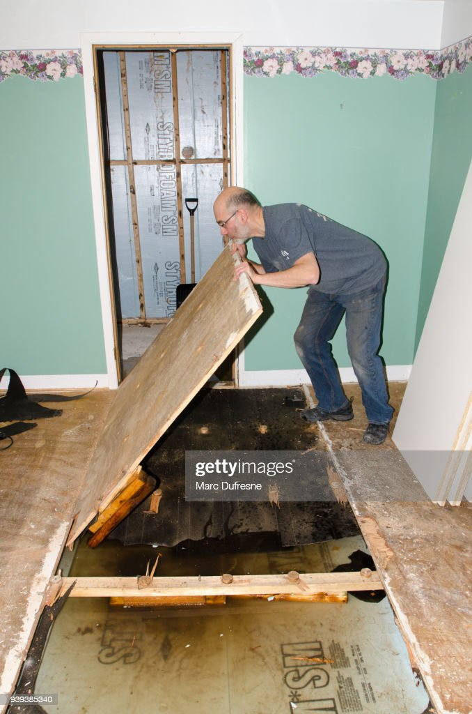 Man removing wooden board from floor after damage in basement caused by sewer backflow due to clogged sanitary drain : Stock Photo