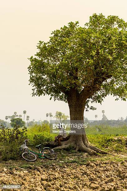 man resting below tree in green field - merten snijders stock-fotos und bilder