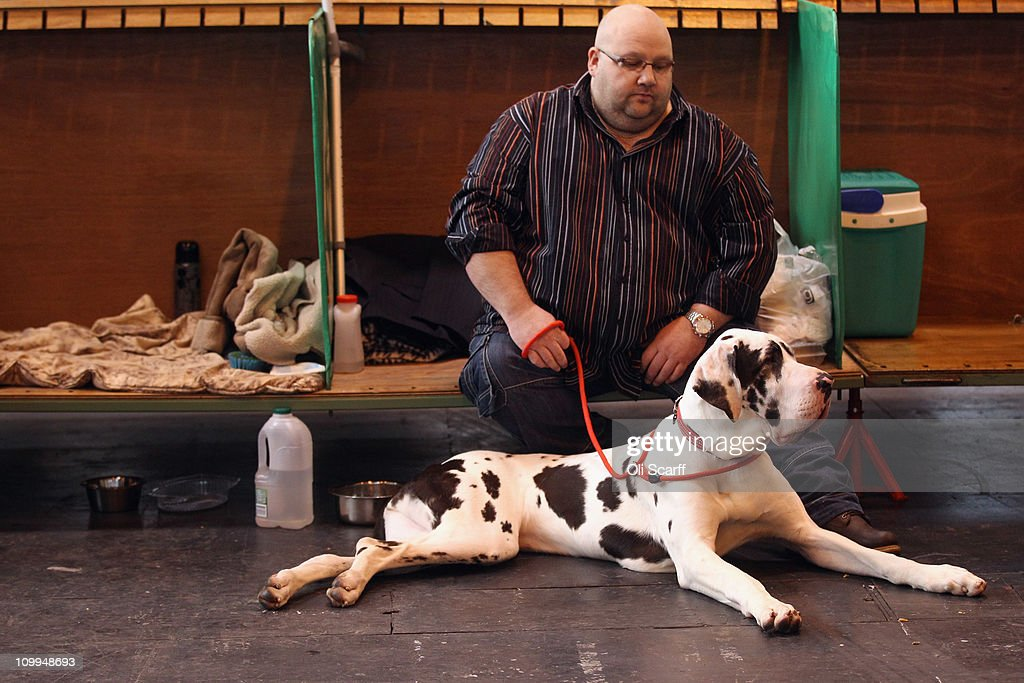 A man rests in the stalls with his Great Dane dog on the second day of the annual Crufts dog show at the National Exhibition Centre on March 11, 2011 in Birmingham, England. During this year's four-day competition nearly 22,000 dogs and their owners will vie for a variety of accolades, ultimately seeking the coveted 'Best In Show'.