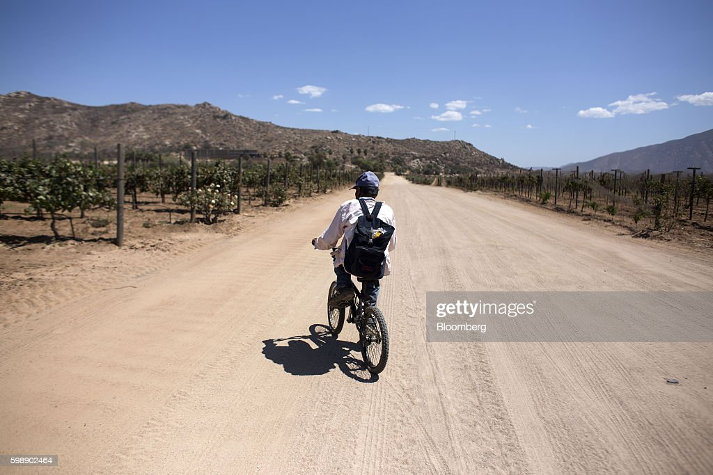 Vineyards In Mexico's Valle De Guadalupe Wine Region : News Photo