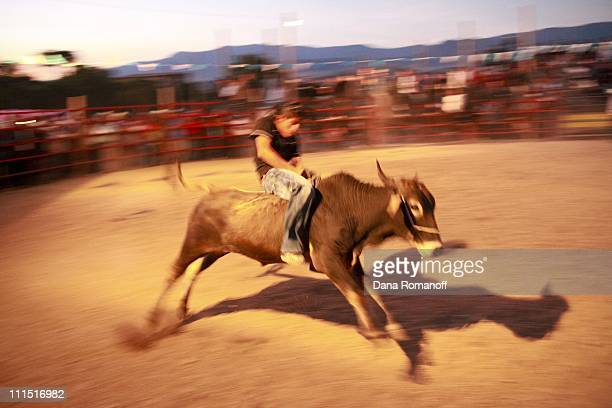 A man rides a bull during the annual rodeo on November 19 2009 in the Zapotec town of San Marcos Tlapazola in the Central Valley of Oaxaca Every year...