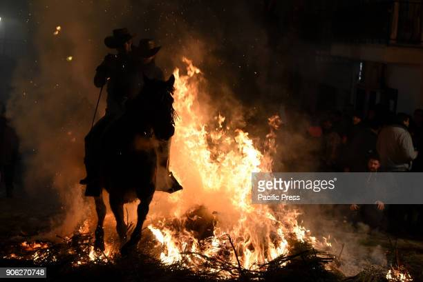 A man rides a horse through a bonfire as part of a ritual in honor of Saint Anthony the Abbot the patron saint of domestic animals
