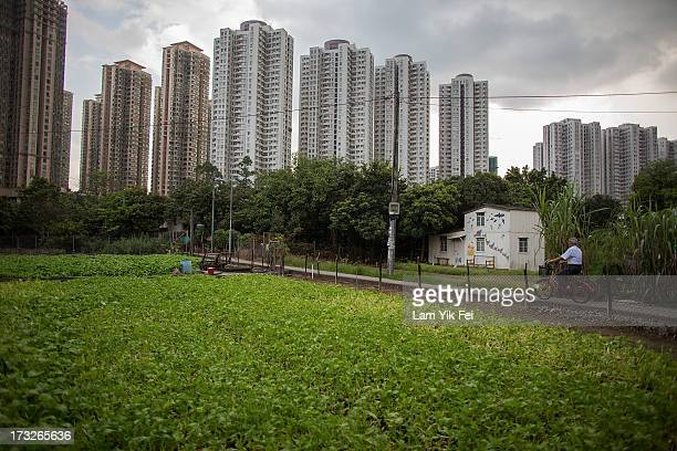 A man rides his bicycle in Ma Shi Po Village on July 11 2013 in Hong Kong China The North East New Territories New Development Areas project proposed...