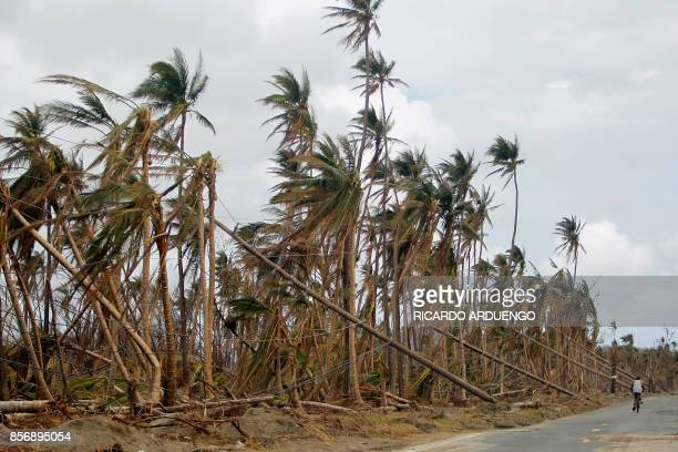 TOPSHOT A man rides his bicycle on a road next to downed power line poles in the aftermath of Hurricane Maria in Humacao Puerto Rico on October 2...