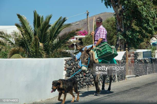 Man rides on a donkey in the picturesque village of Oia on Santorini Island Greece